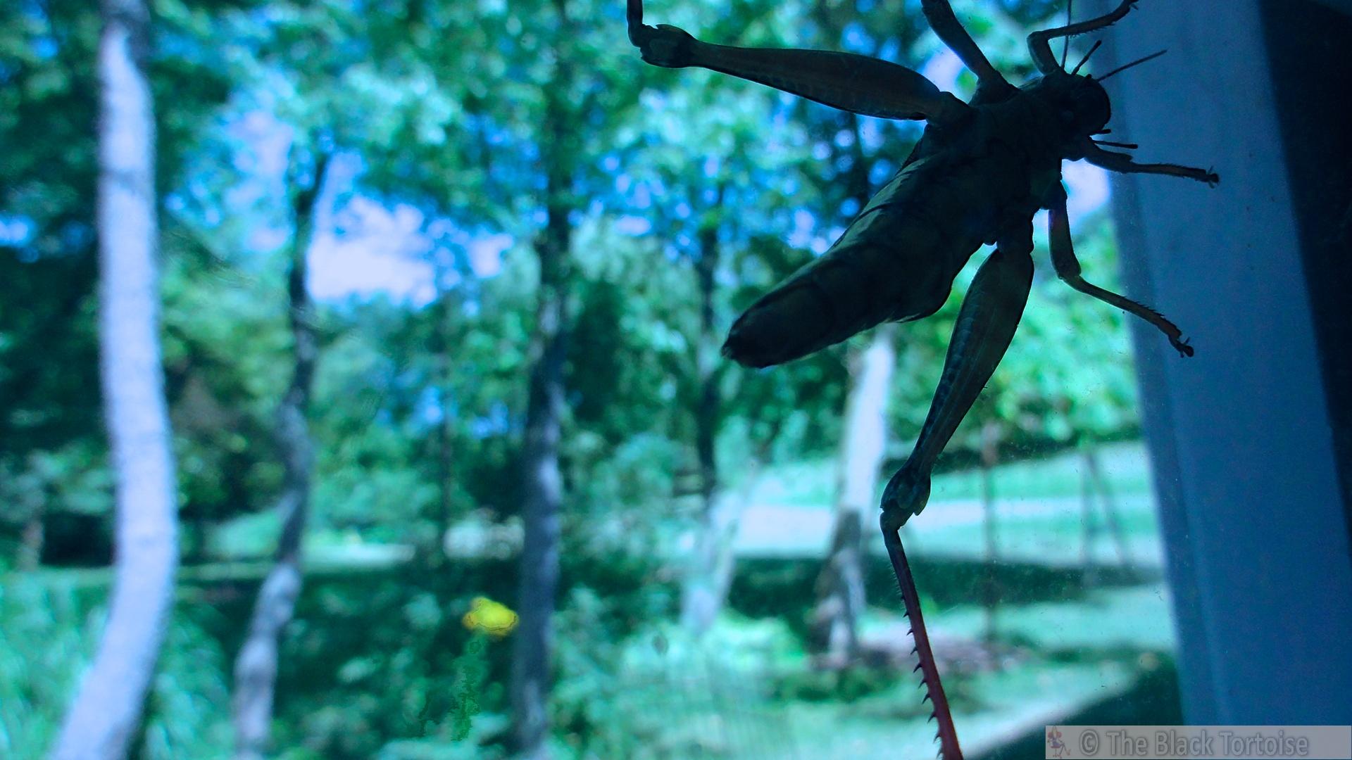 grasshoppr 2